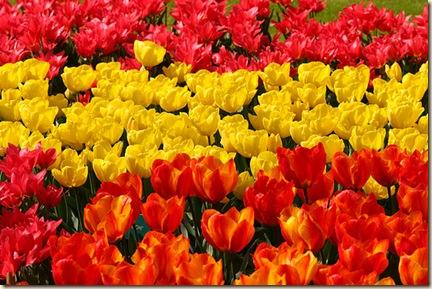 Flores - España