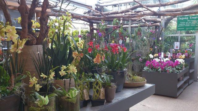 plantentafel orchideëenhoeve