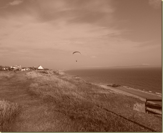 flying sepia