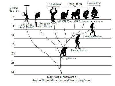 filogenia primatas