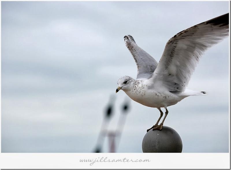 birdstand1