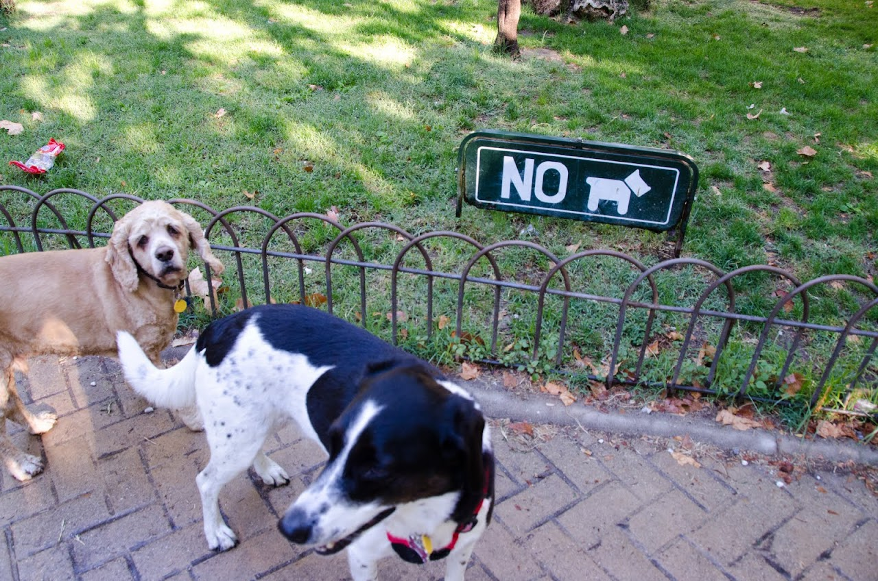 Chewy and Abby with No Dogs sign