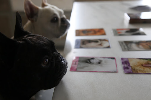 Sharkey, I'm really anxious to find the French Bulldog card and see how they describe us!  Where is it?