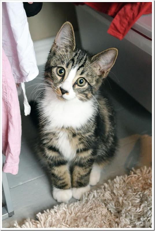 katten2