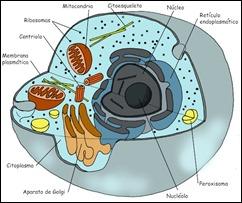 morfologia animal