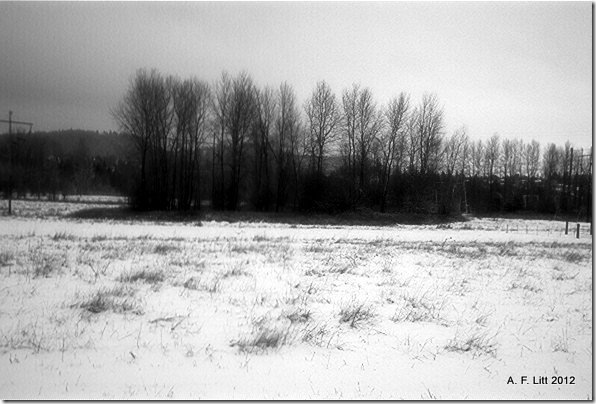 Snow.  Holly Ridge.  Gresham, Oregon.  January 16, 2007.