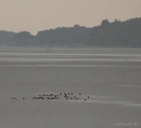 2. fog and ducks-kab