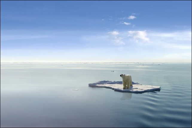 A polar bear is stranded on a small piece of ice, a victim of global warming. Photo: Jan Martin Will / Shutterstock