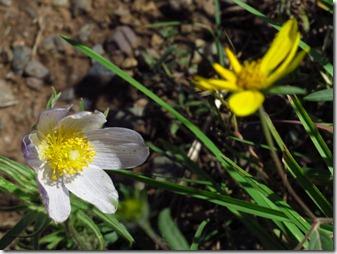 627 tiny flower (640x480)