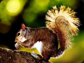 brown-squirrel-eating-nuts-on-a-tree-1