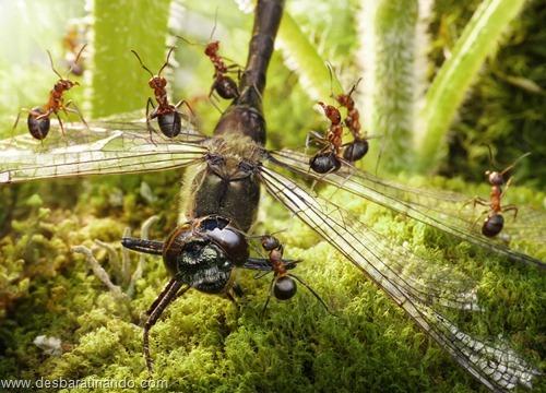 formigas inacreditaveis incriveis desbaratinando  (40)