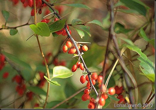 CF_Autumn_Berries2