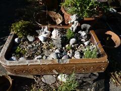 garden june 2011 018