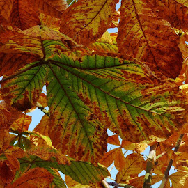by Terry Gower - Nature Up Close Leaves & Grasses