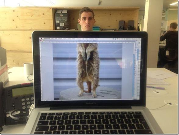 photobomb-coworkers-animal-5