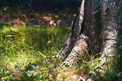 The-Tree-6
