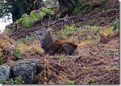 Bradgate Park - DSLR Deer hunting