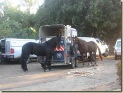 Police Hoses in Haifa (Small)