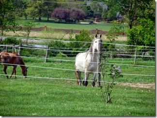 horse05-19-14c