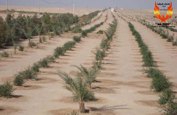 City green belt in Karbala Province. iraqphoenix.com