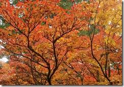benmore autumn colours