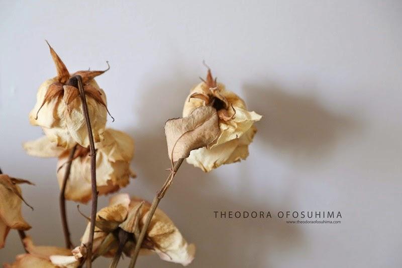 IMG_4897 theodora ofosuhima still roses