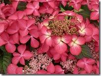 birds flowers 094