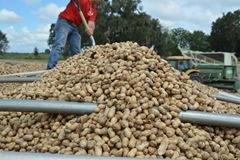 peanuts 033