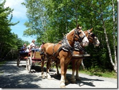 Carriage tour on the carriage roads