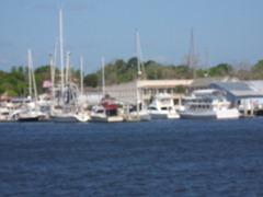 cumberland-island 071