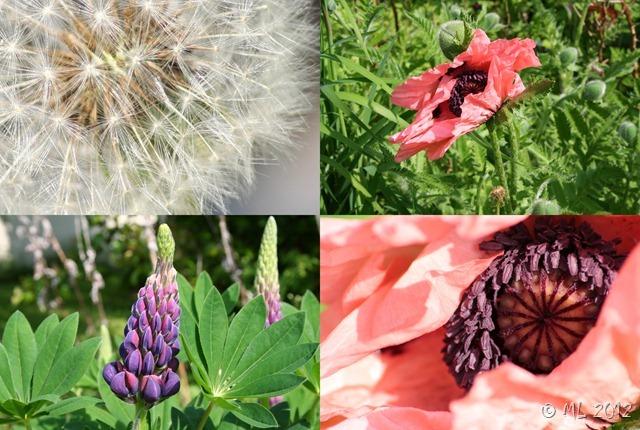 blomster i maj 2