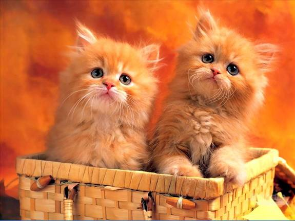 I am love these Cats