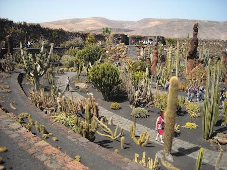 Jardin de Cactus Lanzarote, nu-i aşa că pare o pictură
