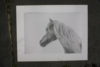 horse_portrait_2
