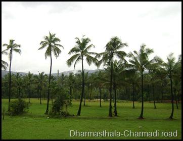 Dharmasthala-Charmadi road