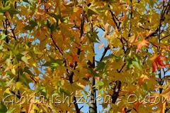 12 - Glória Ishizaka - Folhas de Outono