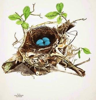Bird nest watercolors