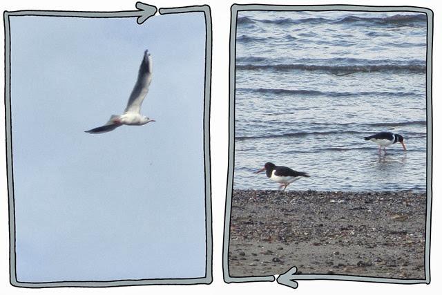up-down-birds