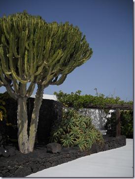 Lanzarote mare 568