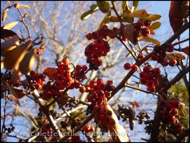 Passeggiata a Padulle - 29 gennaio 2014 (31)
