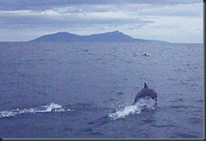 Dolphins with Atauro