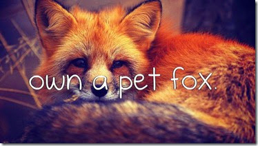 Bucket List - Own a Pet Fox