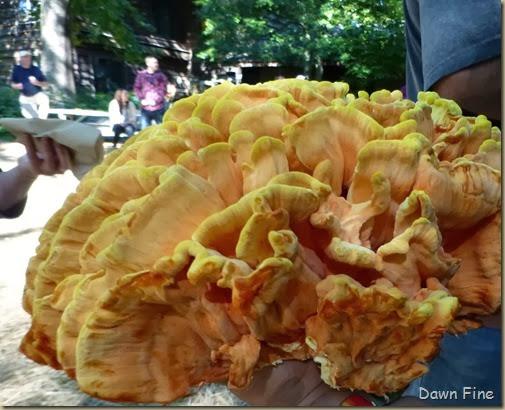 Mushroom festival_053_thumb[3]