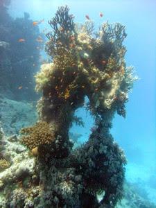 St John s Coral Garden