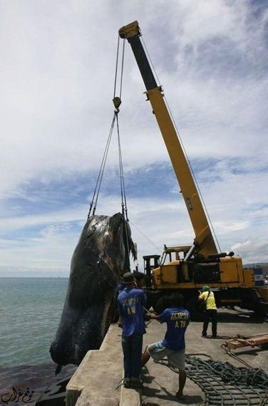 دفن الحيتان