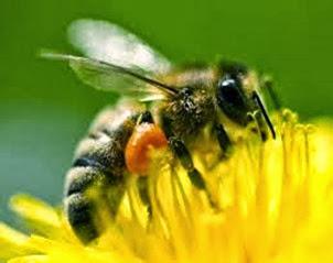 Amazing Pictures of Animals, Photo, Nature, Incredibel, Funny, Zoo, Bee, Insetcs, Anthophila, Alex (6)