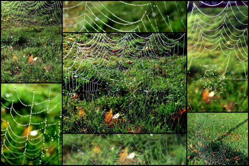 2011-10-09 web2