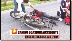 03 IMAG. CANINO OCASIONA ACCIDENTE EN CARRERA A GRAL CEPEDA.mp4_000007107