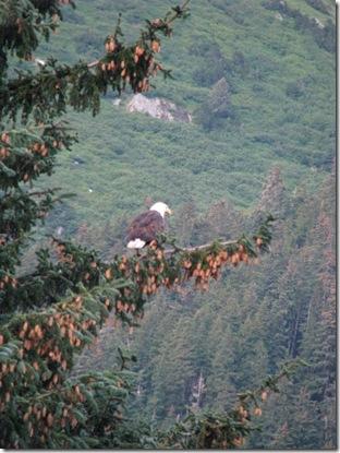 Bald Eagle 8-16-2011 7-09-37 PM 2448x3264