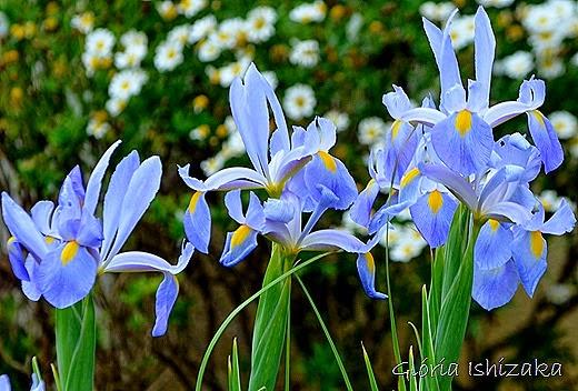 Glória Ishizaka - azul